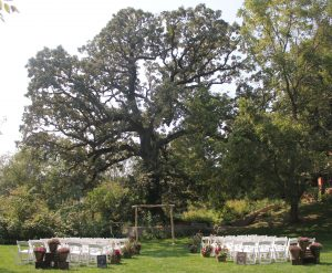 Wedding Setup 60 Guests Burr Oak Tree Background