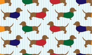 dachsund dogs in sweaters